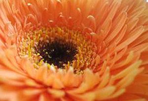 zoom sur fleur orange
