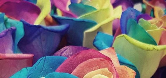 pleins de couleurs de fleurs vue zoomée