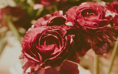 fleurs séchées rose